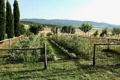 Alla Pieve_garden